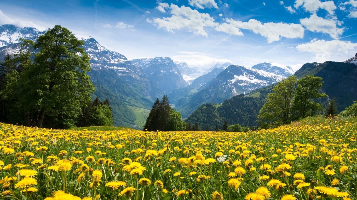 Фото красивой природы и цветов на рабочий стол 63