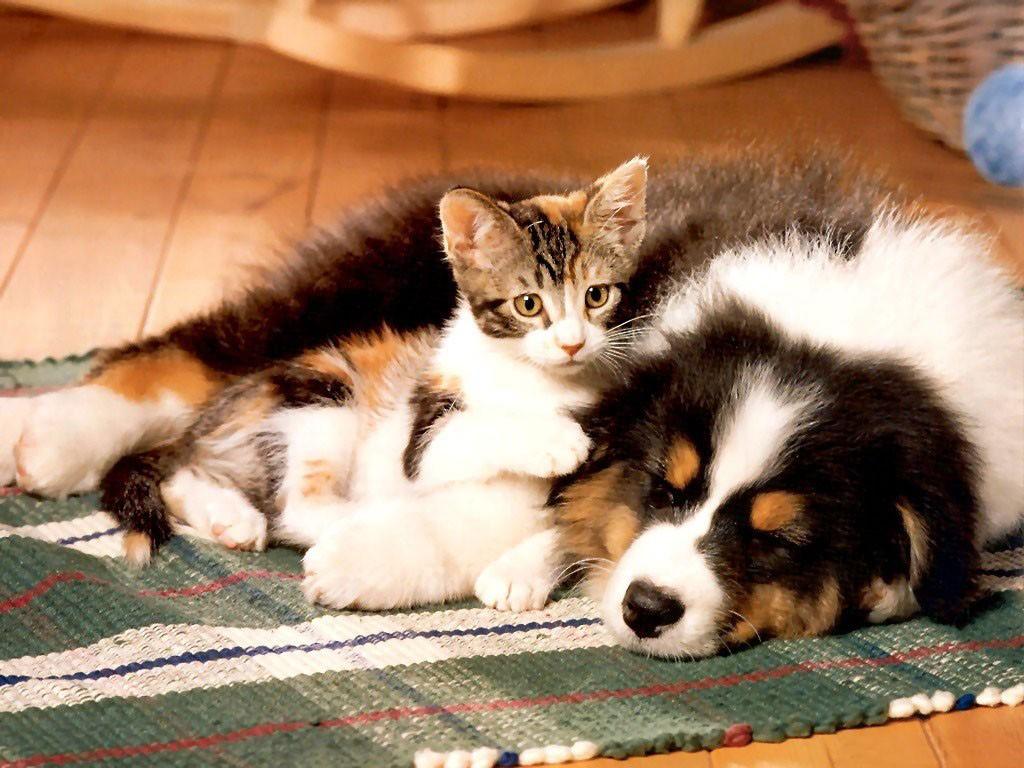 Обои собаки на рабочий стол