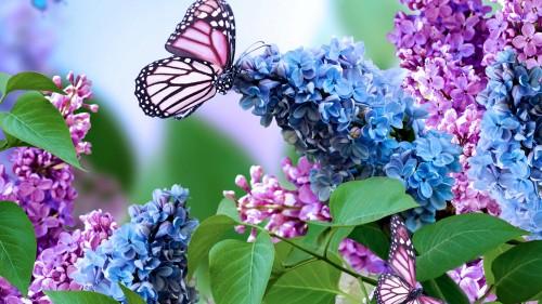 Бабочки на сирени