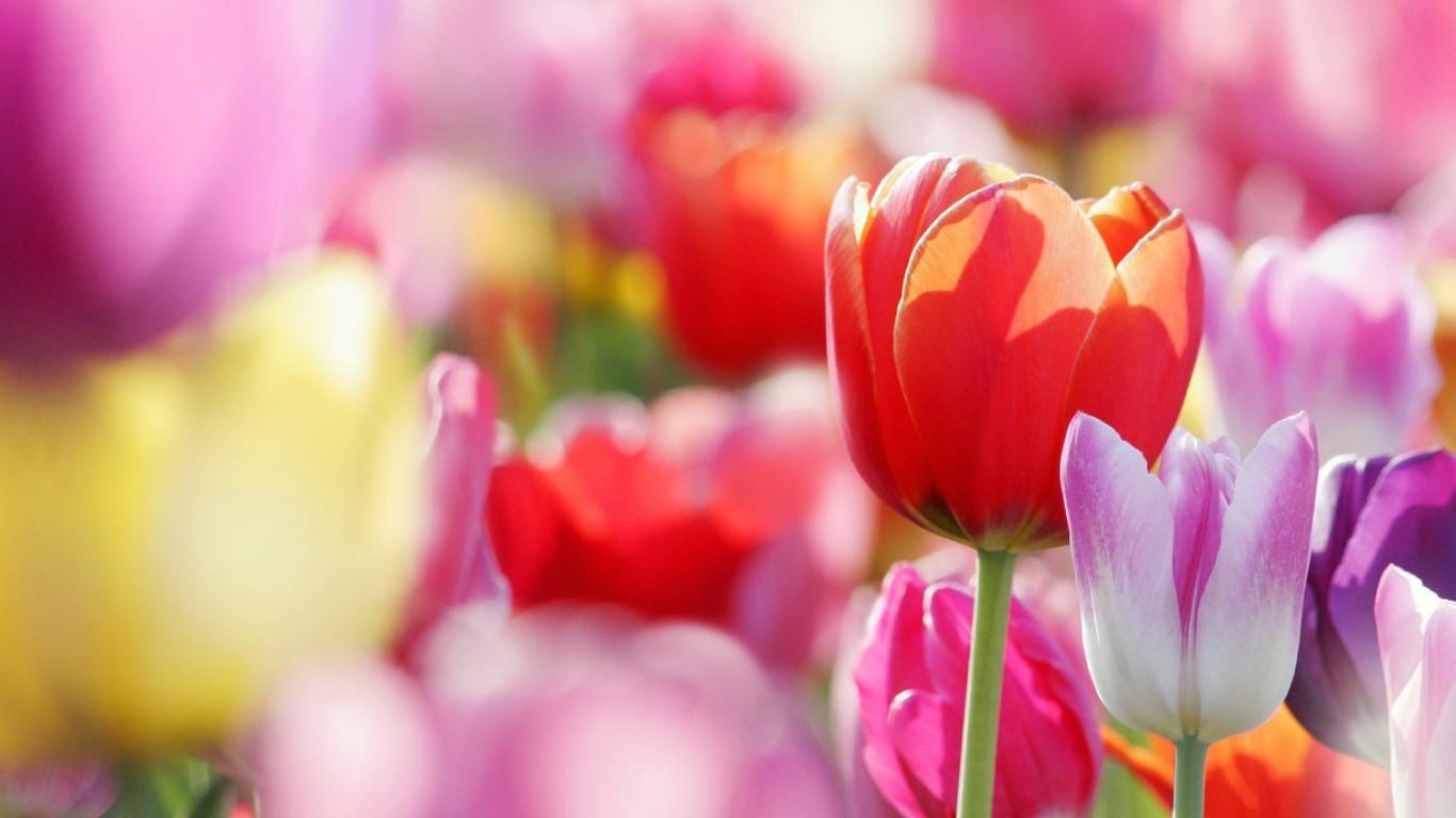 обои для рабочего стола природа цветы 1690